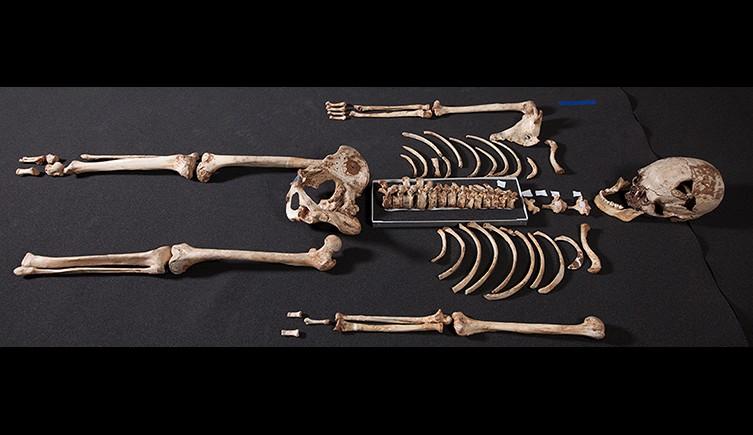 Cheddar Man skeleton
