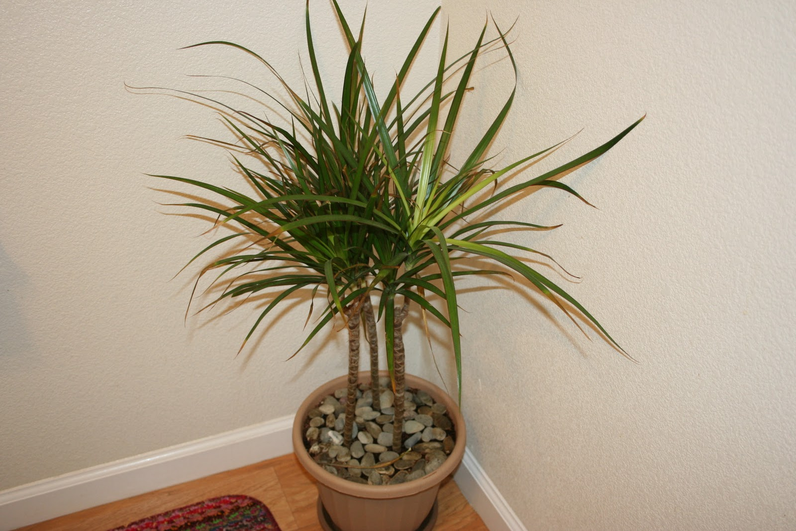 Best Kitchen Gallery: Top 10 Tropical House Plants Any One Can Grow The Self Sufficient of Popular Tropical House Plants  on rachelxblog.com