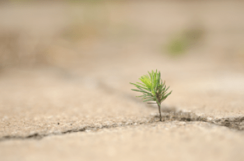 product-photography-ottawa-stephanie-de-montigny-seo-squirrel-pine-tree-inspirational-perfect-conditions-baby-tree