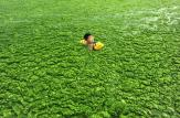 A boy swims in algae-covered waters off the coast of Qingdao, China (map) in 2011—just one of the places around the world where algae blooms are a growing problem.