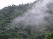Transpiration from the Amazon is vital for the water cycle to take place