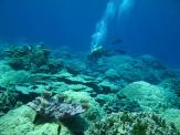 Coral reefs are a major concern in a world of increasing ocean acidification and nutrients.