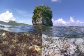 Globally Warming Oceans Are Killing Coral Reefs, like here in Samoa.