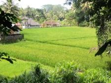 Jakawana rice patty