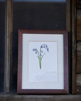 bluebell print