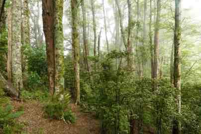 Hinewai Reserve The Seventh Generation Principle
