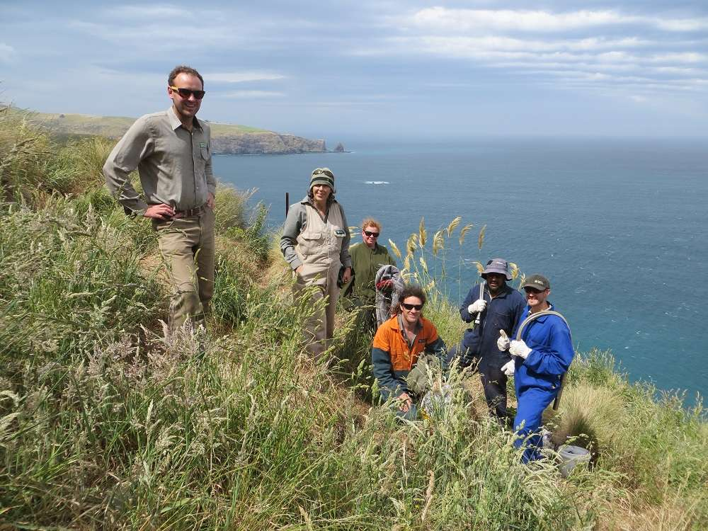 """Read more about the article The Amazing """"Wildside Project"""" #1 on Banks Peninsula"""
