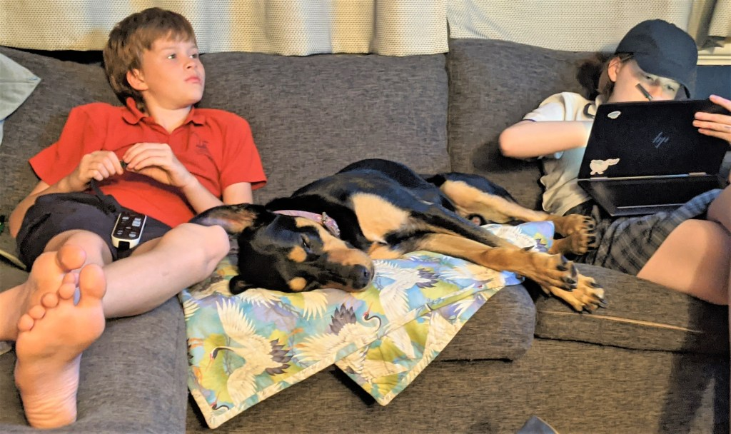 A young boy in a red top, a black and tan kelpie dog and a girl drawing on her computer are sitting on a grey couch.  They are all looking away from the camera.