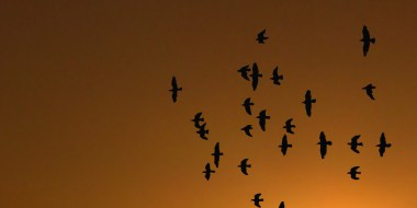 Chaud devant ! Changement climatique et migration des espèces
