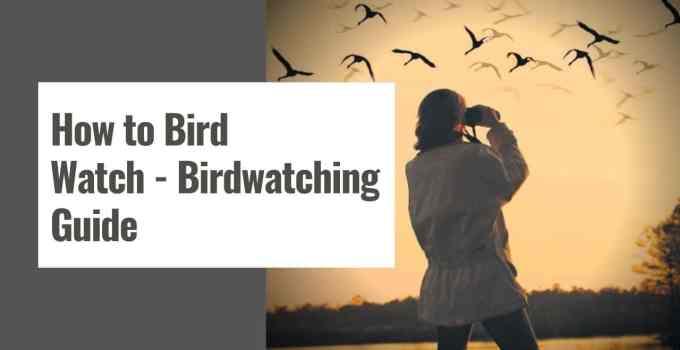 How to Bird Watch