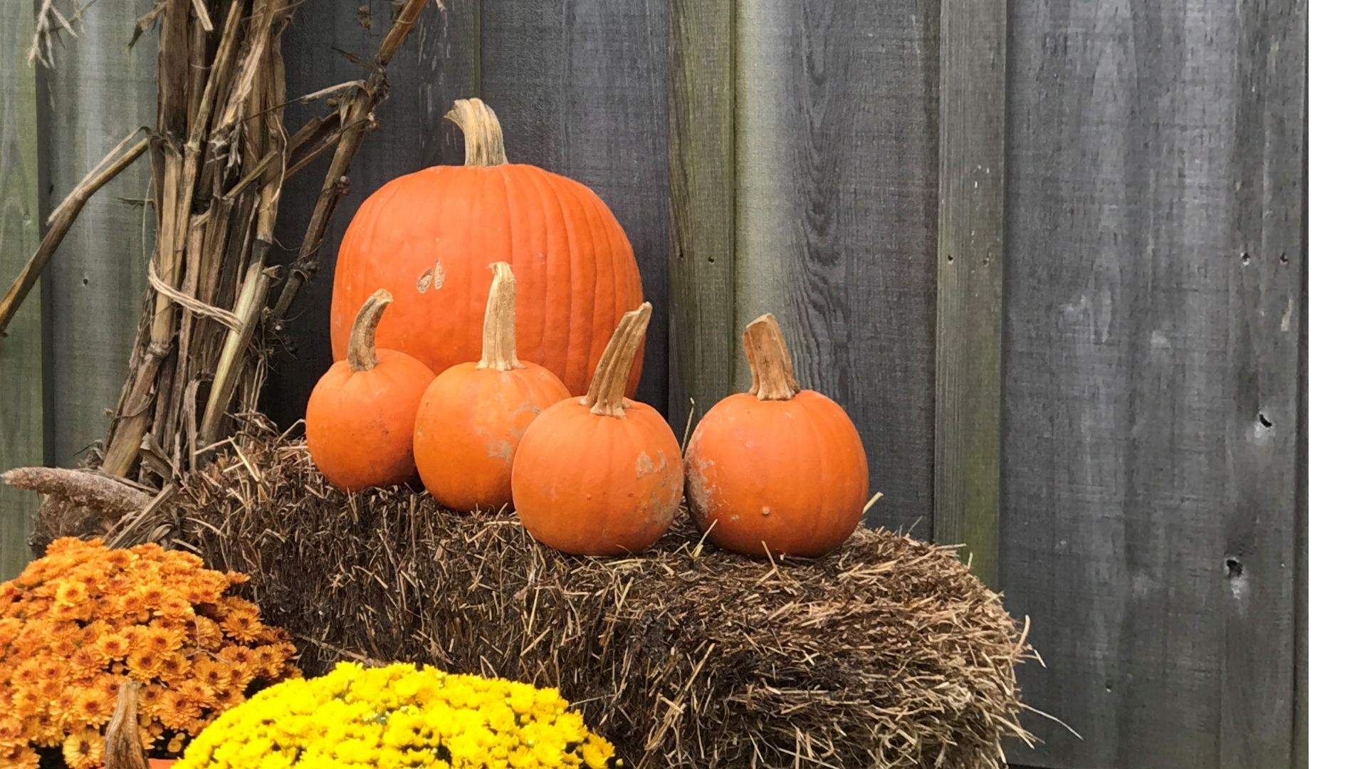 Fall…for Food and Fun!