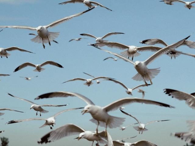 Beach etiquette: Don't feed seagulls