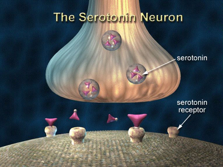 how serotonin neurotransmitters work