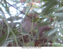 gray jay nest 2