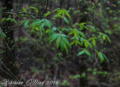 downward flight of the leaves