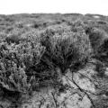 Sand Dunes found near trail 1 in Sandy Neck Park. Cape Cod, MA