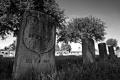 Louisiana's Chalmette Battlefield & National Cemetery