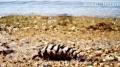 Pine cob seen in one of many shorelines surrounding Quabbin Reservoir