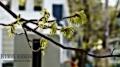 Spring in Essex, Main square