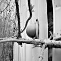 The Detroiter: An abandoned trailer seen on Center Street. Centralia, Pennsylvania