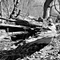 The shipwreck tree. Valley Forge National Park. King Of Prussia, PA