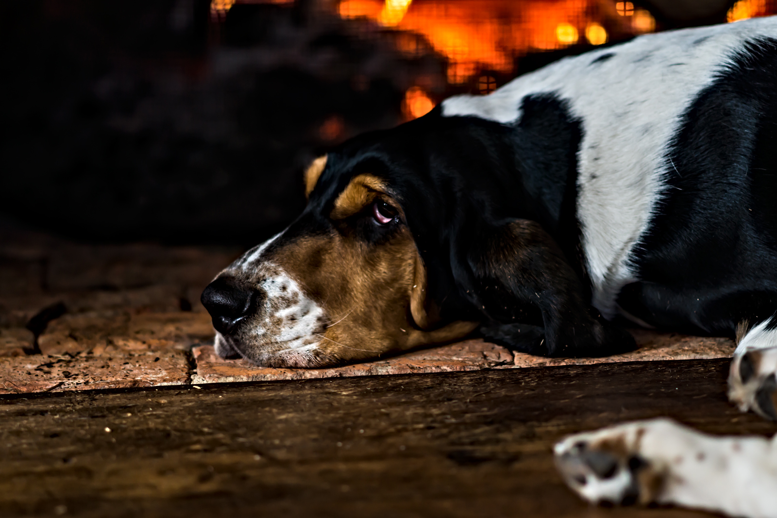 Eyes [and Whiskers] of the Basset Hound