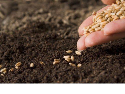 seeds-of-joy-1.jpg