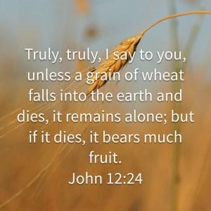 john-12:24