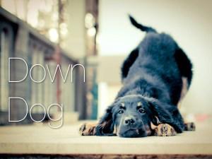 down-dog