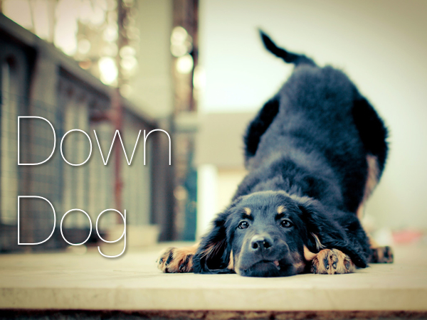 Dog Days – Workouts #128 & 129