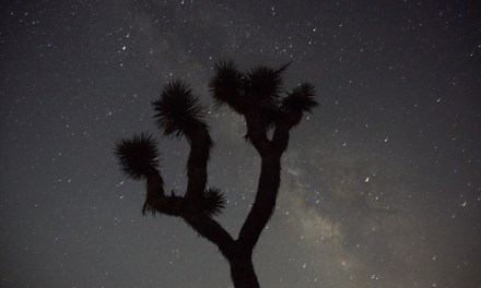 Joshua Tree National Park:  First Time Camping