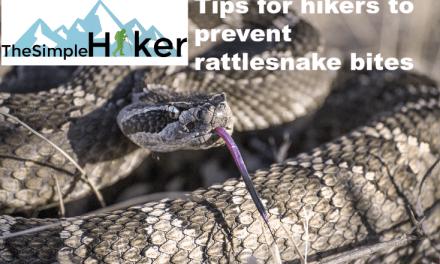 Nine Tips For Hikers To Prevent Rattlesnake Bites