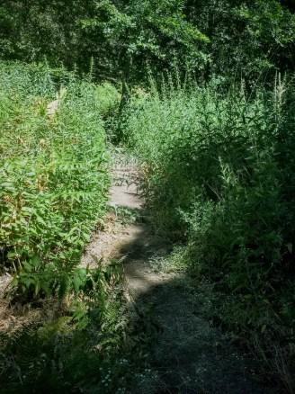 Stinging nettle, hiking