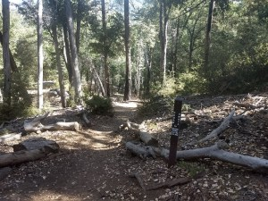 Boucher Trail and Palomar Mountain Loop
