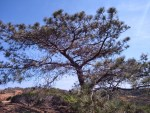 Torrey Pines Hiking Trail Guide, San Diego,