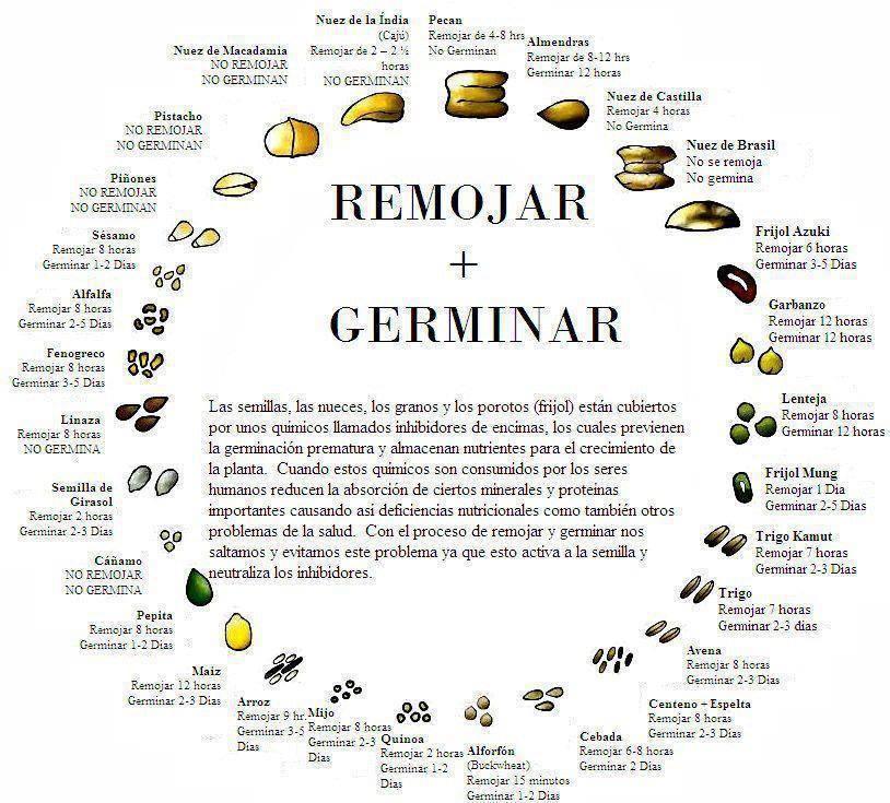 semillas-germinan