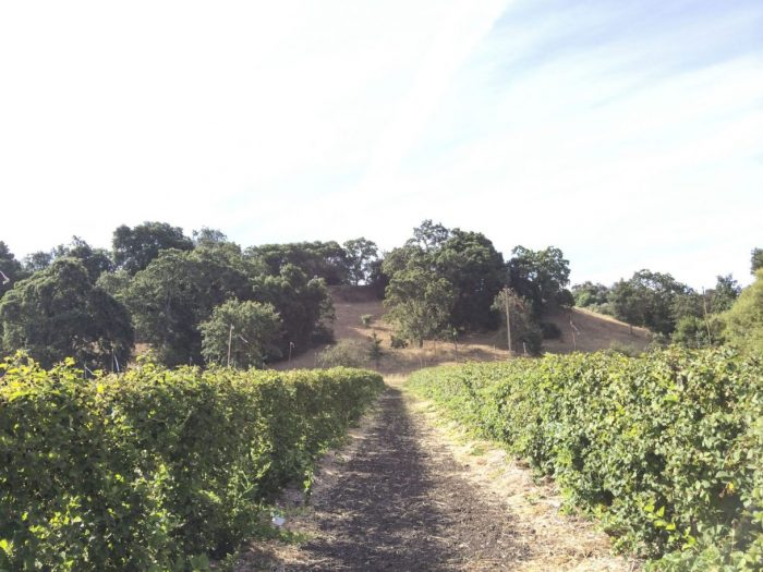 U-Pick Berry Farm - The Simple Proof