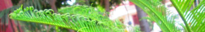 cropped-img_6235.jpg