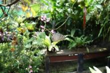 KL Butterfly Garden!