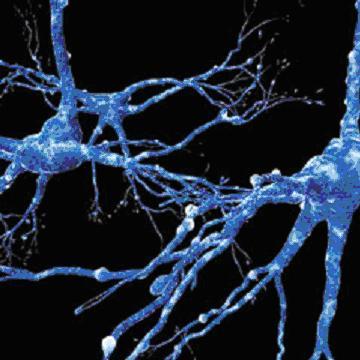 neurons.jpg