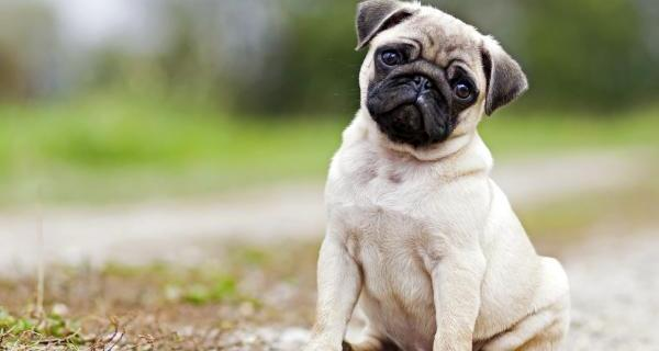Doggy blues: how to spot the signs