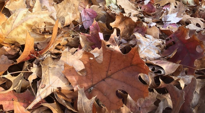 Should You Be Raking The Leaves of Autumn?