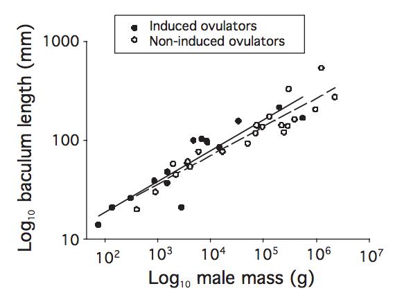IO hypothesis
