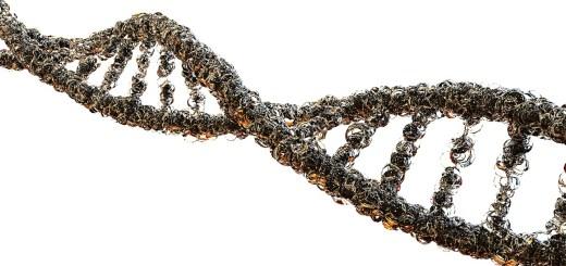 DNA strand genes genetic information