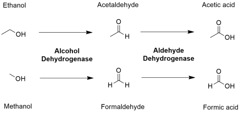 pathway alcohol aldehyde dehydrogenase methanol alcohol poisoning toxicity toxic