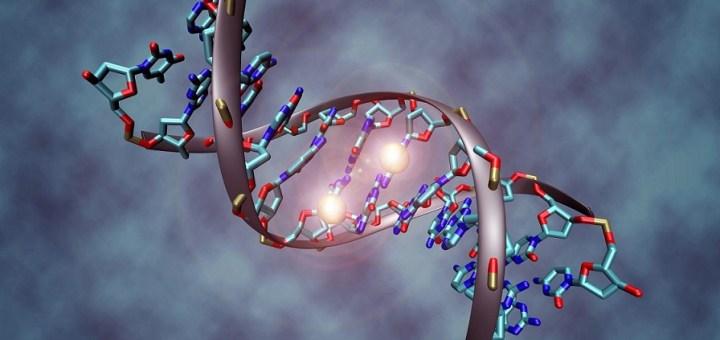 epigenetics mechanism DNA methylation methyl groups binding to helix