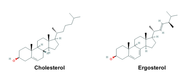 cholesterol ergosterol molecules chemical structure fungal cells