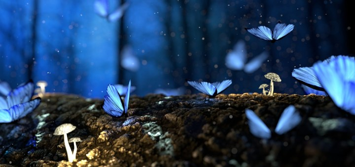 forest of blue butterflies