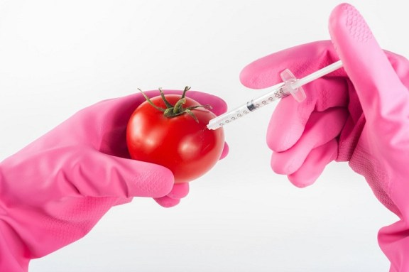 tomato being injected a solution pink gloves