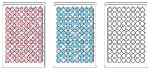 96 well plates high throughput screening